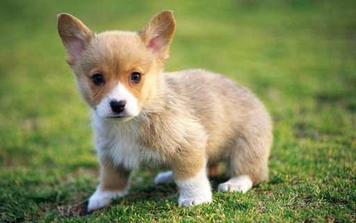 Cute-Puppies-puppies-22040876-1280-800