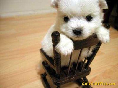 cute-puppy-on-chair-picture