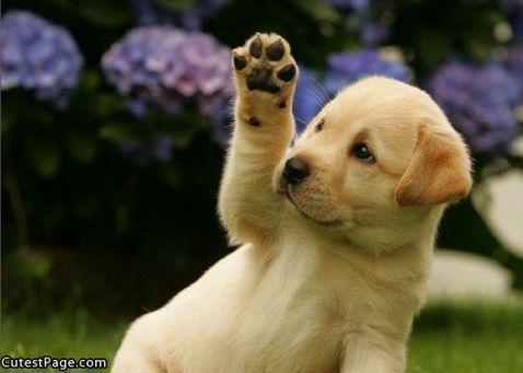 Cute_Puppy_High_5